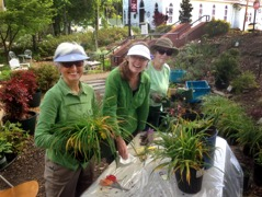 Sandy, Leanne, and Cathy preparing plants - 2017