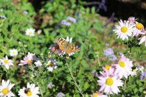 National Garden week in Norcross @ City Hall - Norcross
