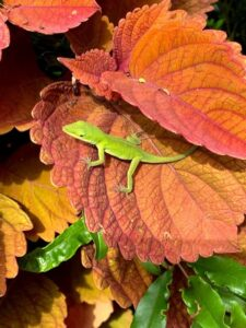 """Such a beauty to be observed, not camouflaged but, standing """"grand"""" in all his/her glory."""